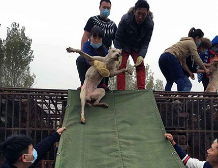 notodogmeat activists in asia