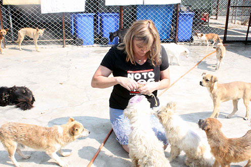 notodogmeat dog and cat sancturies